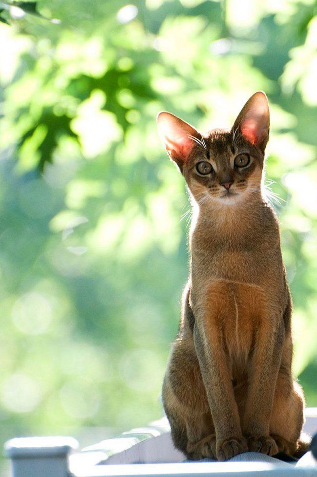 препараты от глистов для котят 4 месяца