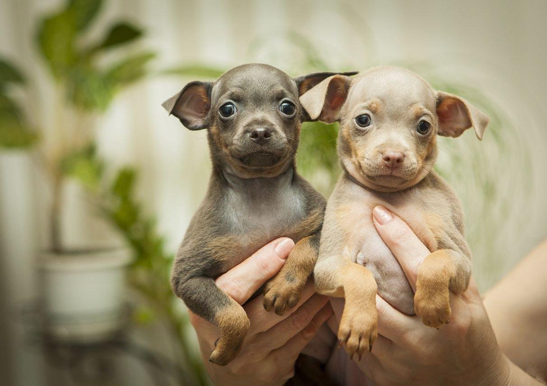 Прививки собаке в 21 - 044
