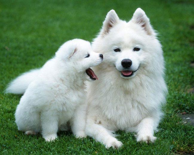 Лайка - это фонтанирующий источник энергии, а еще - любящий и преданный друг