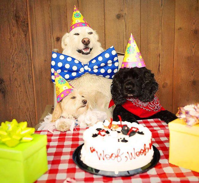 Праздничная вечеринка кокер-спаниеля и его веселых друзей