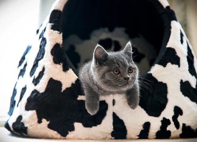 Стильный домик для британского котика
