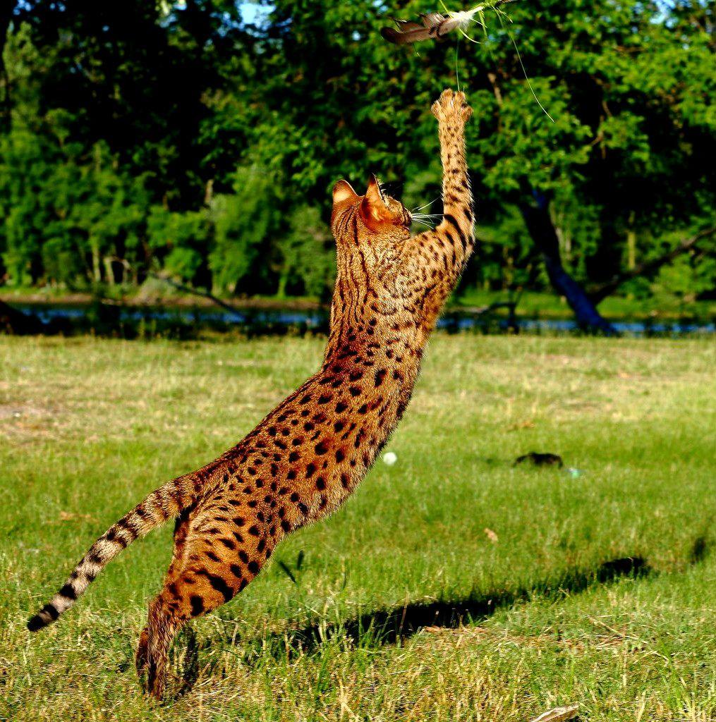 Животное гепард фото