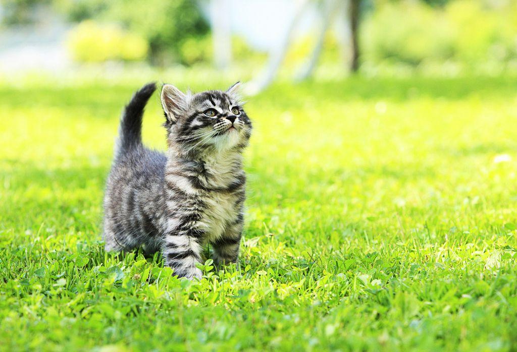 Котята в траве фото