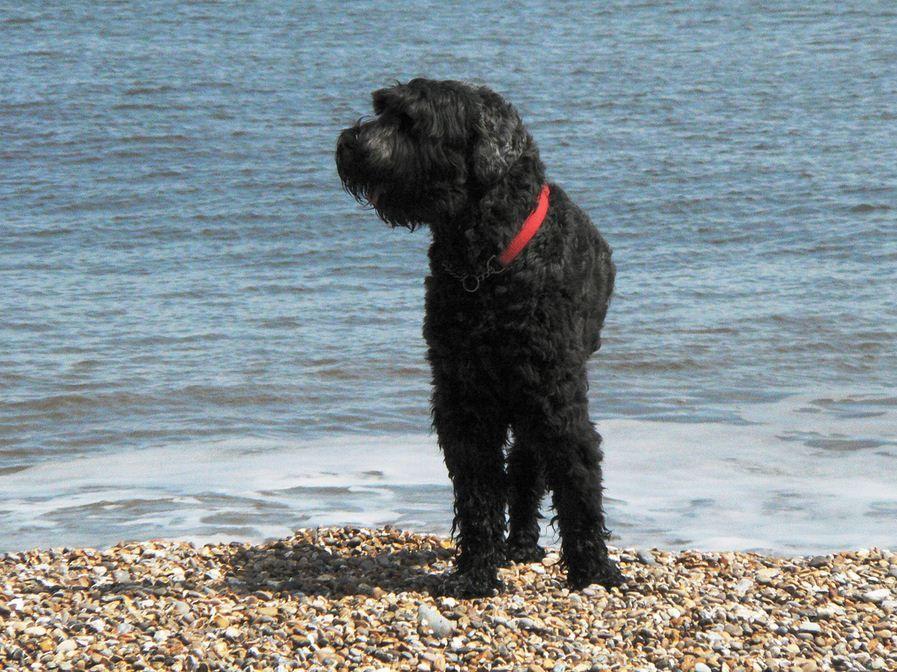 прививка от аллергии на собак отзывы