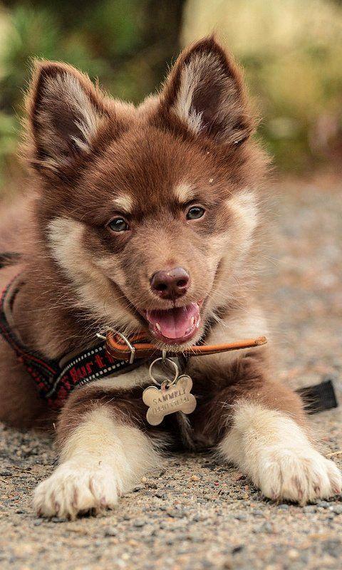 Если вы хотите, чтобы немецкая овчарка стала для вас настоящим другом, отнеситесь к щенку, как к новому члену семьи