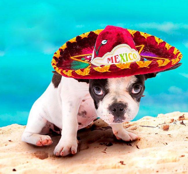 Щенок в мексиканском Сомбреро отдыхает на пляже