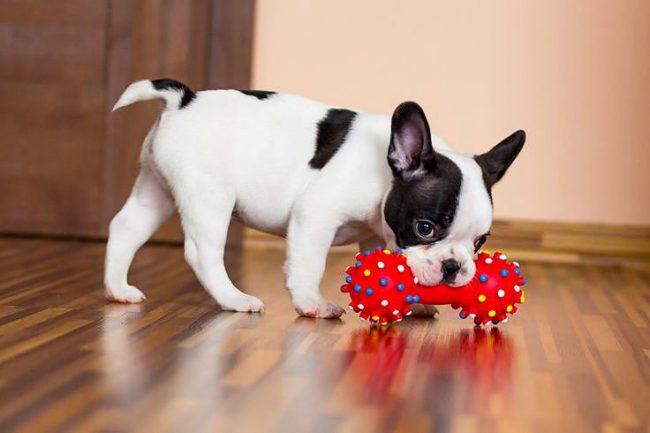 У каждого щенка должно быть достаточно игрушек, чтобы он мог вдоволь наиграться ими в течении дня