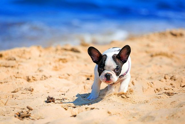 Щенок весело резвится на теплом песке