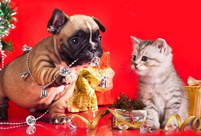 Щенок и котенок помогают нарядить ёлку