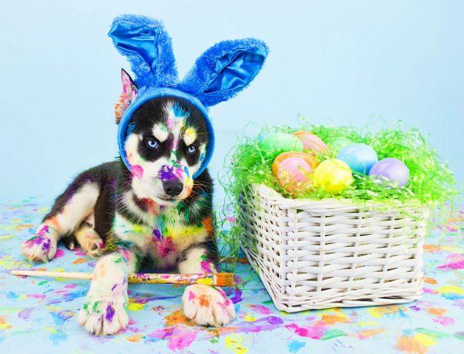 Боди-арт-гав – новая форма искусства придуманная щенком хаски