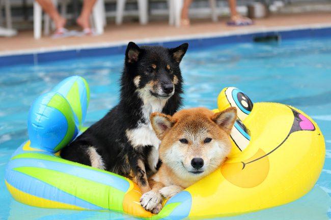 Улыбка этой собаки любому хозяину поднимет настроение