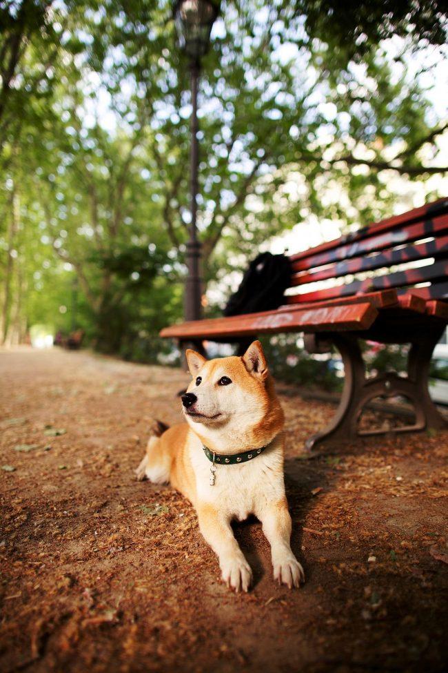 Примечательная особенность этих собак – они исключительные собственники