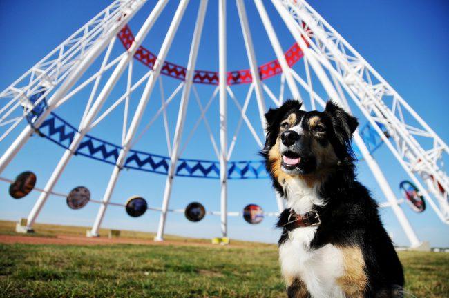 Собаки бордер колли очень веселые, игривые, с раннего возраста для них важна социализация, поэтому с ними нужно проводить много времени
