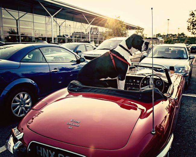 Немецкий дог предпочитает британские авто