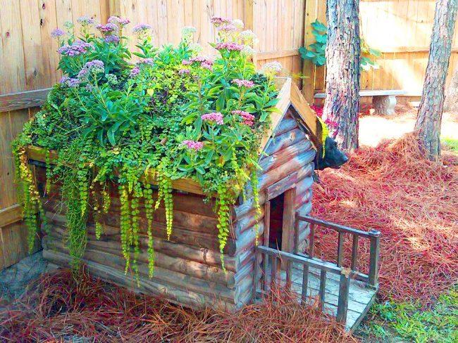 Маленький сад из цветов на крыше будки