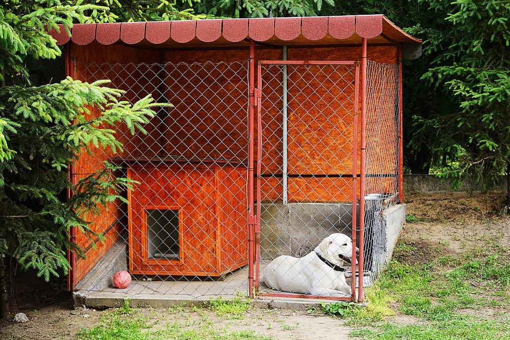 Вольеры для собак фото своими руками фото