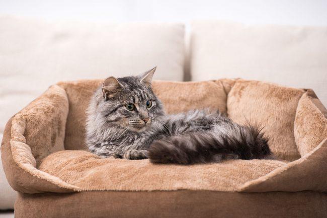 Очень удобный лежак, на котором кошка будет себя чувствовать как настоящий представитель королевской масти!