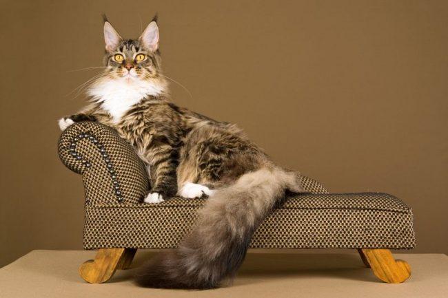 Классический канапе для аристократических пород кошек