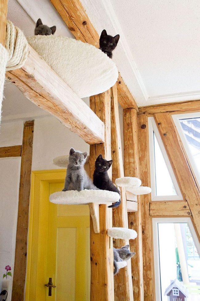 В таком домике кошкам будет, где порезвиться