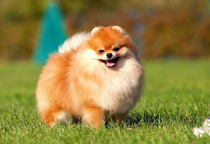 лучшие маленькие породы собак