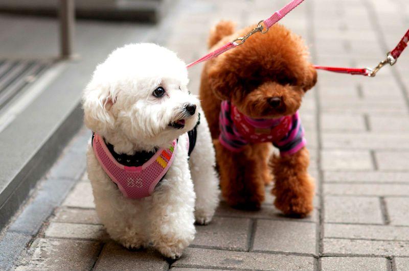 15 лучших пород собак: для детей, для аллергиков, для маленькой ... | 531x800