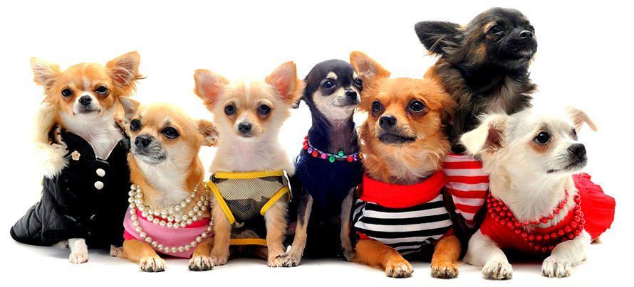 среднеразмерные породы собак