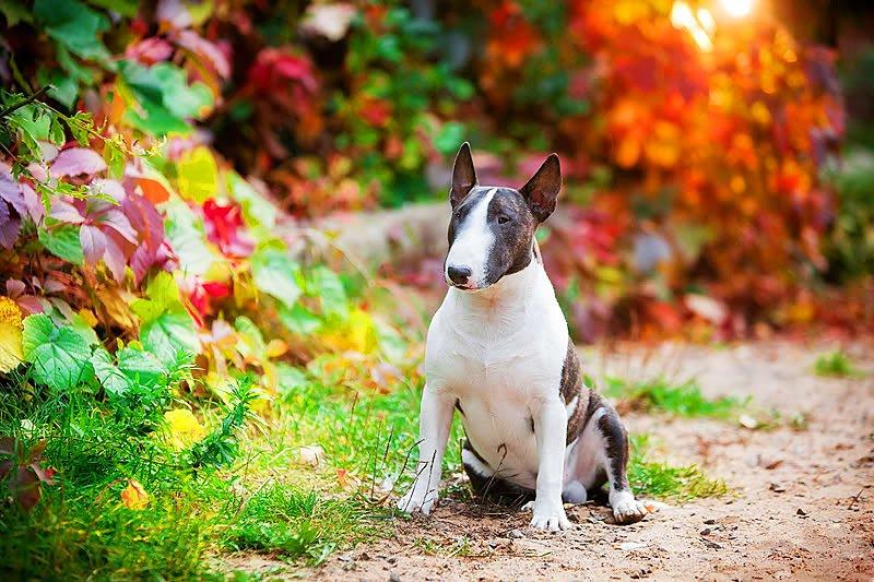 масти собак с фотографиями и названиями