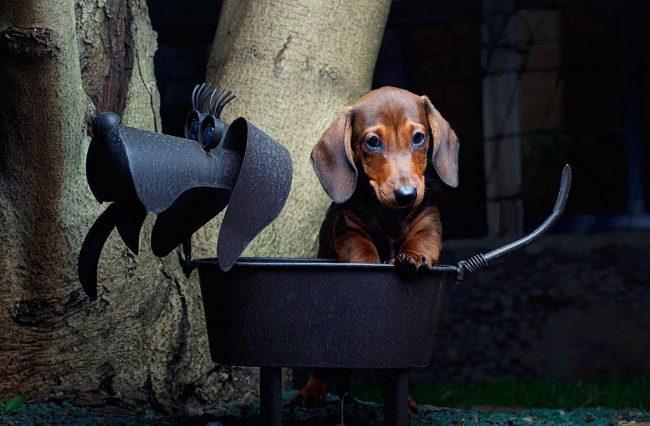 Недавно инженеры придумали специальный мангал для собак - теперь любой щенок может поджарить косточку или сосиску по своему вкусу