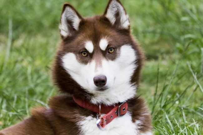 какие самые красивые собаки