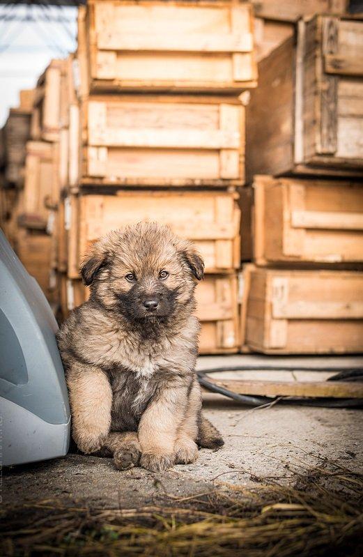 Маленький медвежонок - будущий серьезный охранник