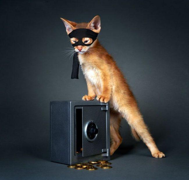 Абиссинская кошка довольно-таки игрива. Ее легко можно завлечь веселой игрой. Именно поэтому у нее складываются хорошие отношения с детьми