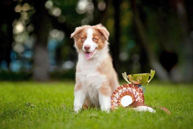 Самый ловкий, быстрый и послушный пес получает главный приз и вечную любовь хозяина