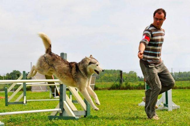 Выбор собаки для занятий аджилити