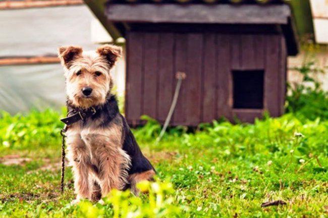 Профилактика аллергии сводится к исключению или минимизации контакта собаки с раздражителем ее иммунитета. Например, если это реакция на укусы насекомых, стоит купить специальный ошейник, а также перед прогулкой обрабатывать песика репеллентом