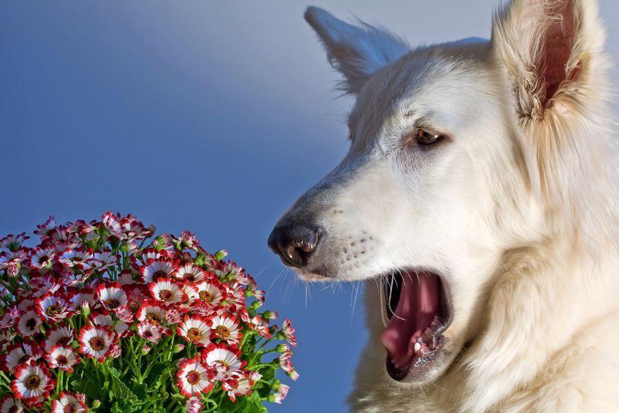 аллергия у собак лечение в домашних условиях