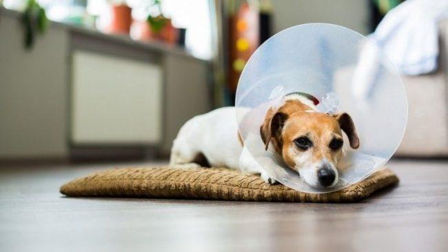 сезонная аллергия у собак