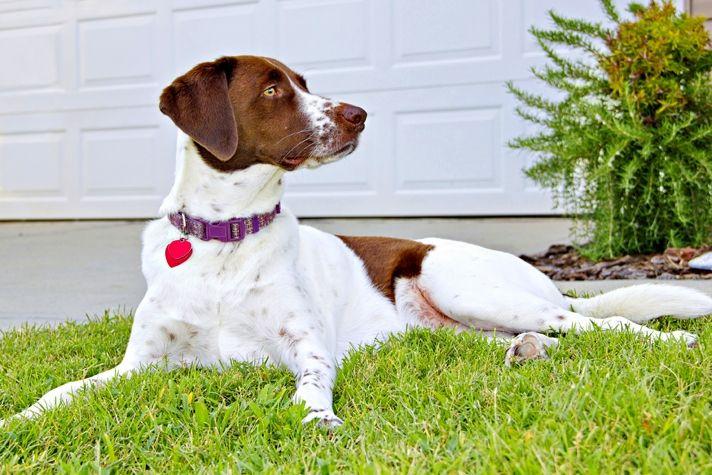 аллергия у собаки чем лечить в домашних