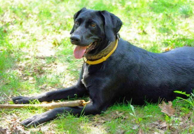 Ошейник - это простой и значительно недорогой способ профилактики блох и клещей, к тому же он весьма удобен для самой собаки