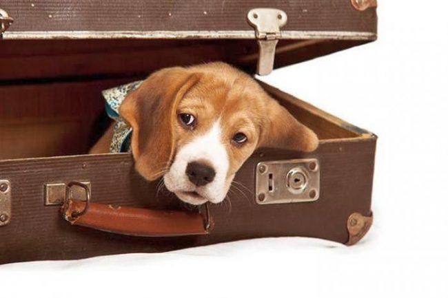 Биглик очень любит играть в прятки. Вначале он долго ищет подходящее место, а потом ждет, когда его найдут