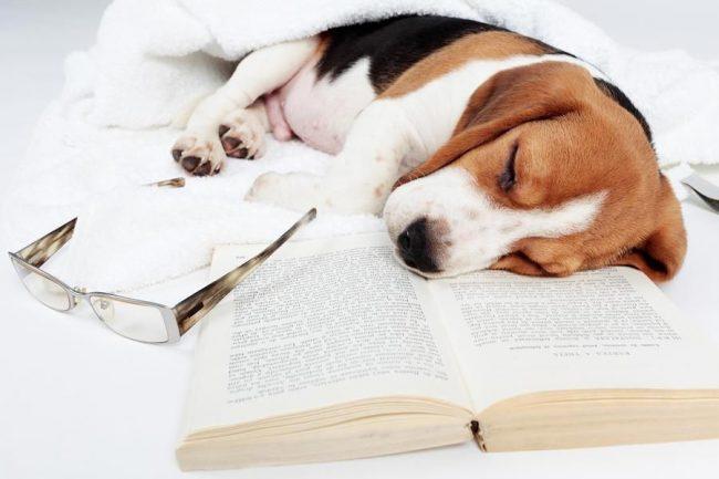 Купить щенка – дорого, а лечить срывы пищеварения и отравления – еще дороже.
