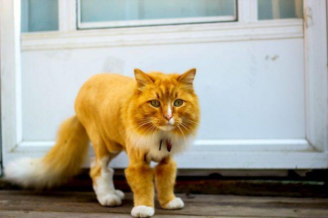 Настоящий Кот в сапогах