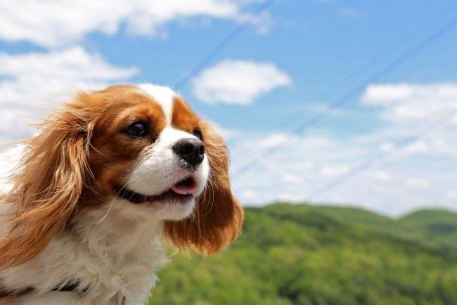 Жизнерадостности и позитиву этого пса можно только позавидовать