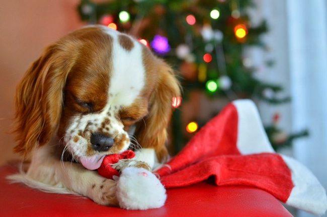 - Вот тебе, Санта, за то, что не принес подарок!