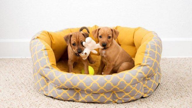 Не выбирайте клички для собак мальчиков заранее, до тех пор, пока вы еще не выбрали животное и не принесли домой. Ваш пес может оказаться вовсе не Дозором, а Бубликом
