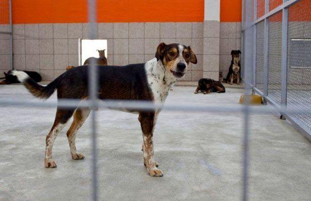 В приютах находятся собаки, которых волонтеры подобрали на улице, или же те, которых по какой-либо причине принесли хозяева