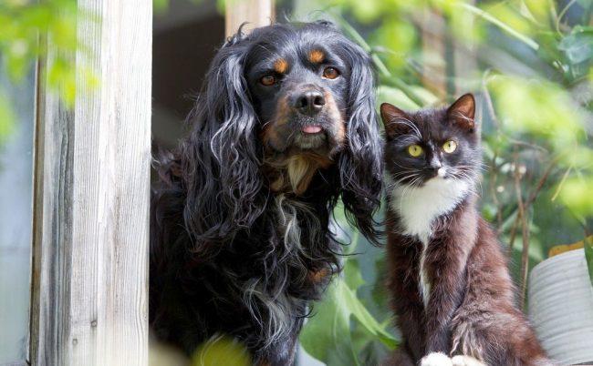 В некоторых приютах живут собаки, коты и другие животные