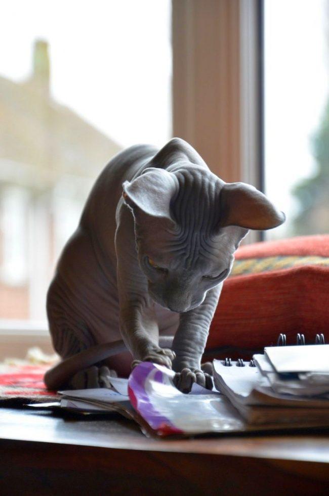 """Котик выбирает себе только одного члена семьи, которого считает вожаком """"стаи"""". Остальных он тоже любит как своих товарищей"""