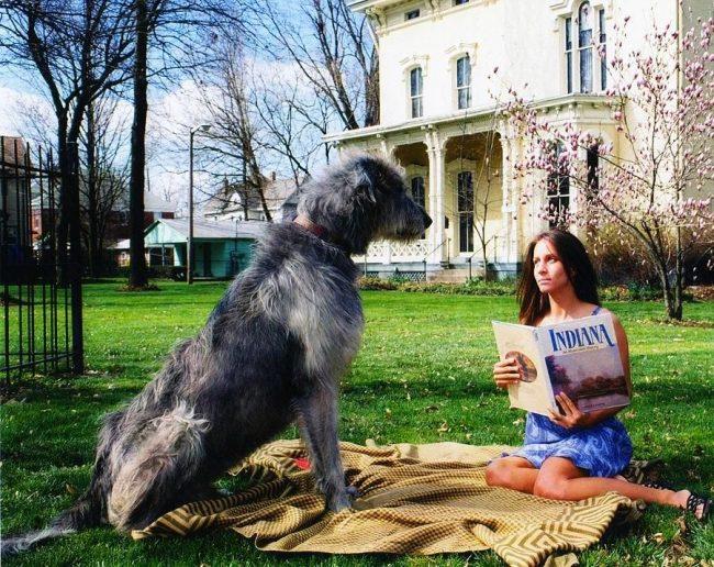 У собак этой породы уравновешенный характер, это не визгливые и не беспокойные псы, а благородные собаки с чувством собственного достоинства, знающие, когда можно, а когда нельзя подавать голос