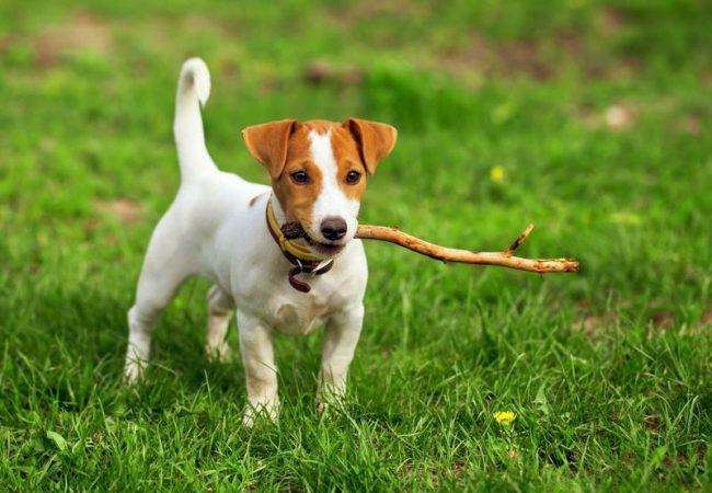 Пес, обладающий нескончаемой энергией