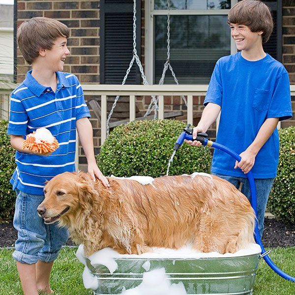 Пообещай, что ты и только ты будешь мыть и вычесывать питомца